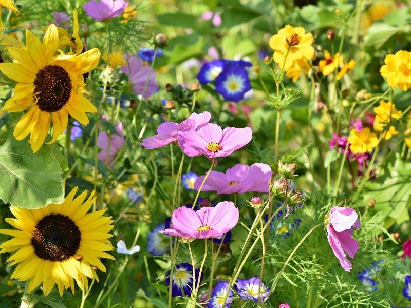 cveće u bašti